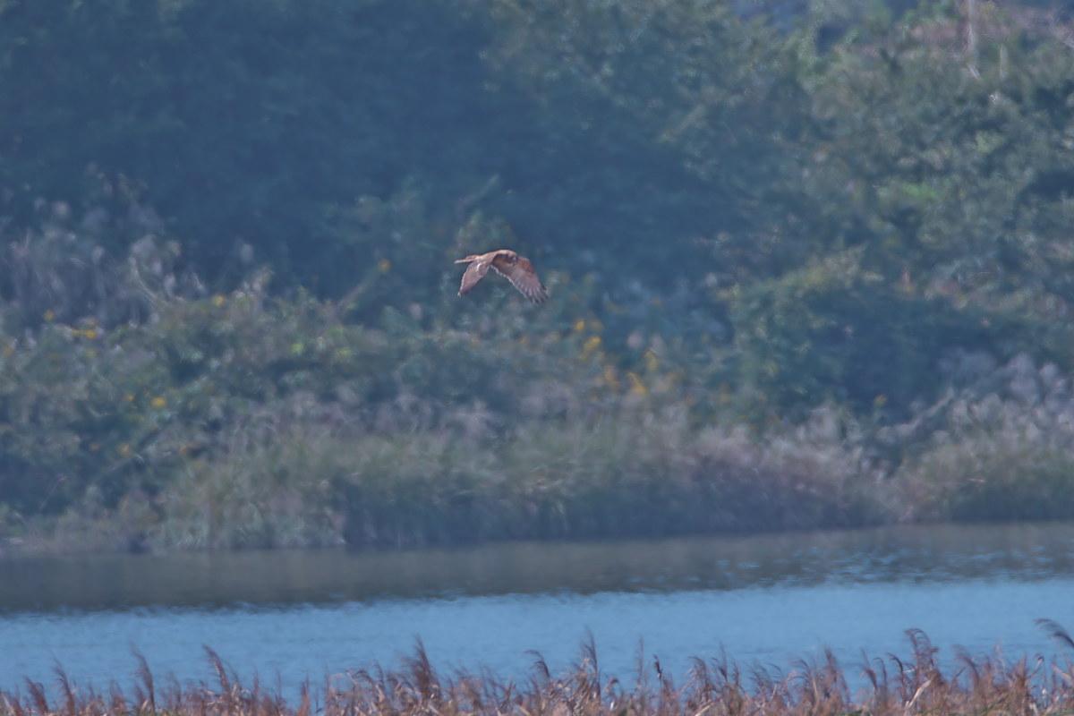 湿原の秋(4)_d0125872_23512722.jpg