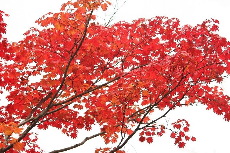 「紅桜公園」 行ってきました。_f0362073_04342580.jpg
