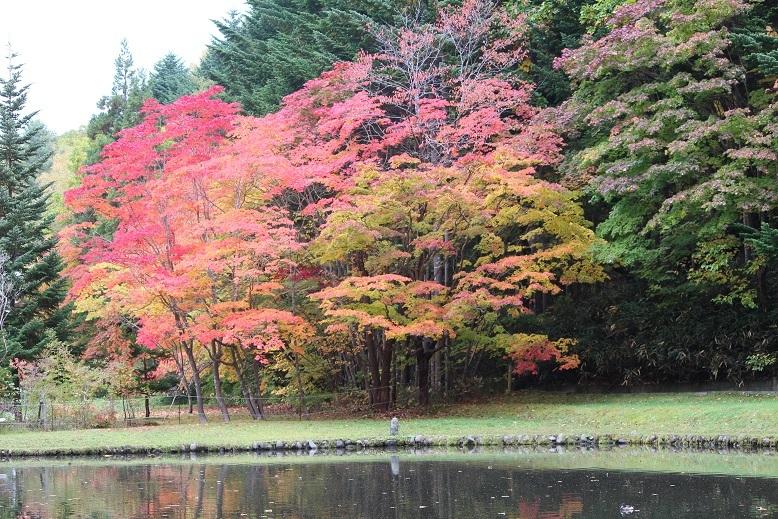 「紅桜公園」 行ってきました。_f0362073_04345449.jpg