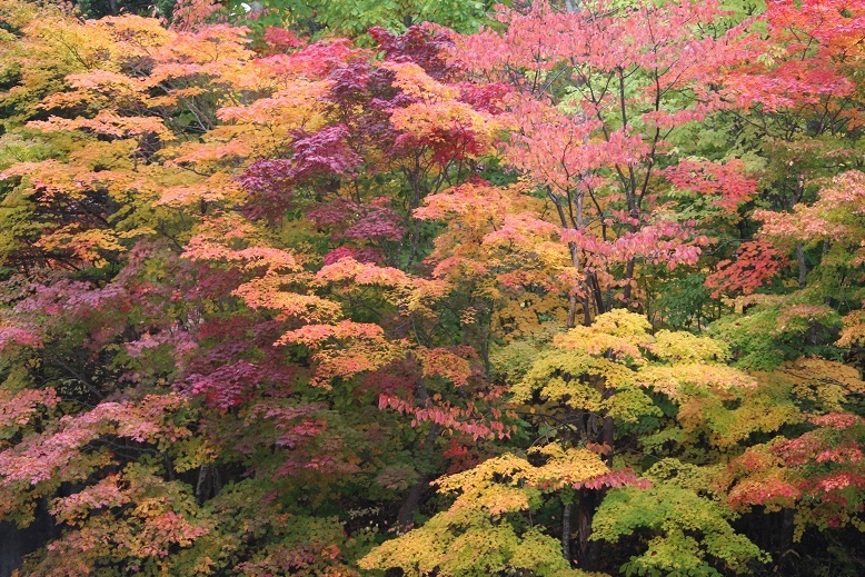 「紅桜公園」 行ってきました。_f0362073_04365517.jpg