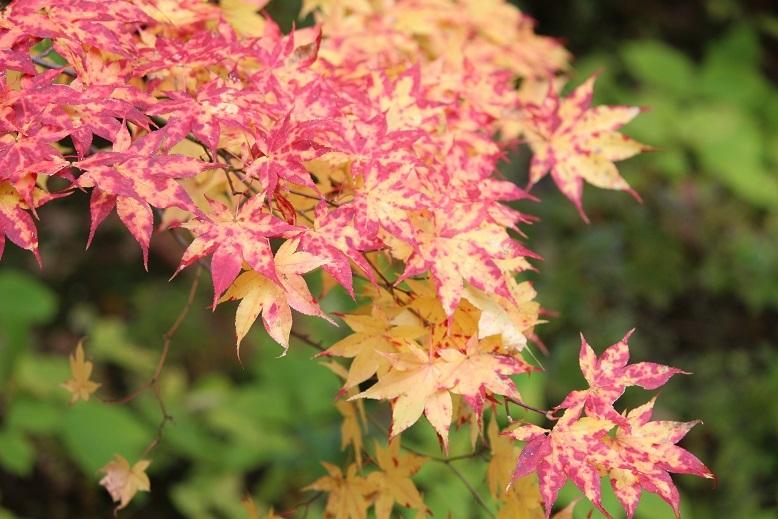 「紅桜公園」 行ってきました。_f0362073_04553739.jpg