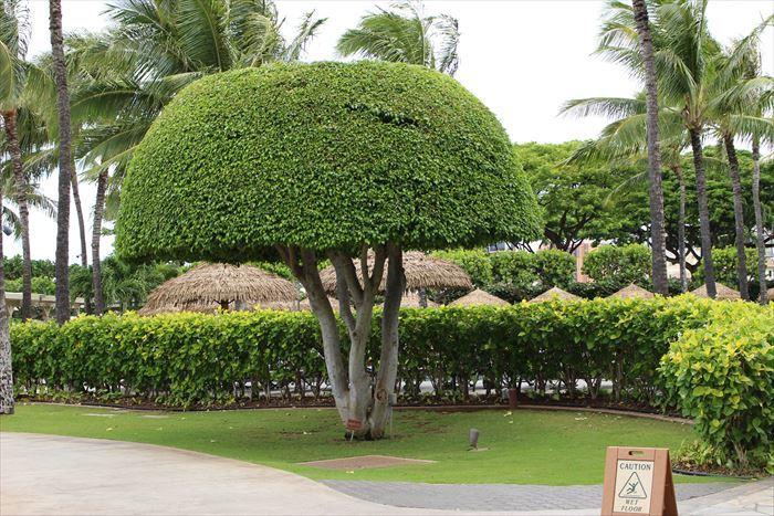 ハワイに行って来ました_b0358779_11534573.jpg