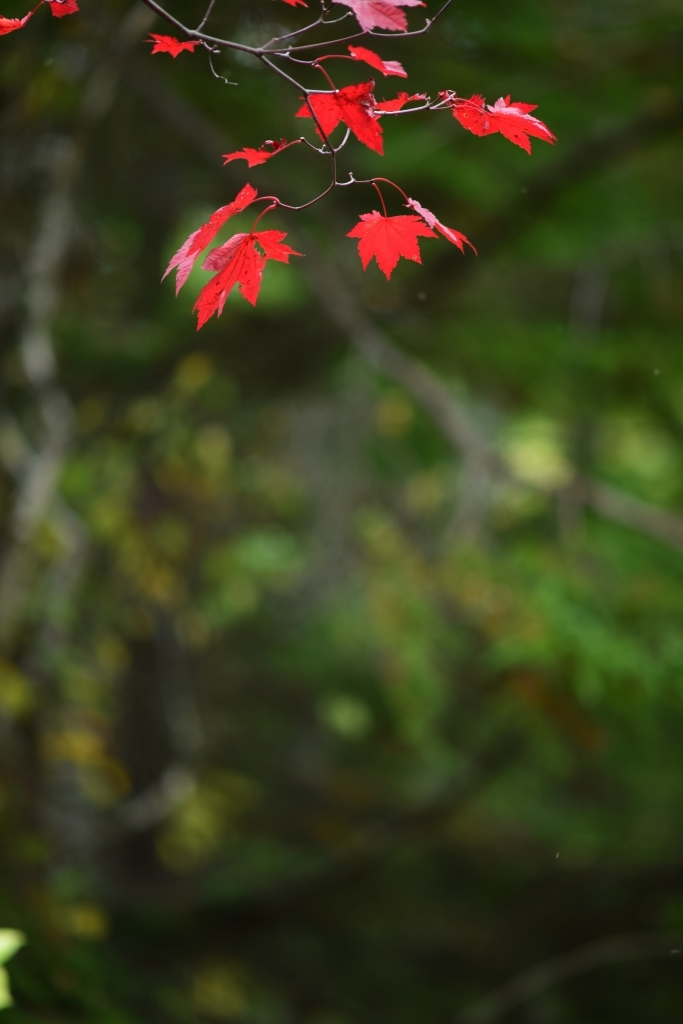 北の森の中で_f0050534_06495505.jpg
