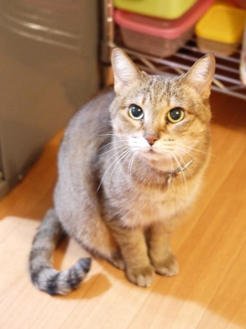猫のお留守番 はなちゃん編。_a0143140_2261361.jpg
