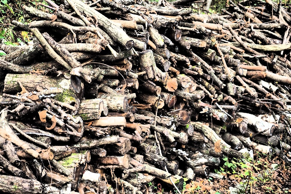 【レポート】Foresters Village Kobitto(フォレスターズビレッジ・コビット 南アルプス)キャンプ編 ① ~やはりコビットは「ナチュラルテクスチャー」の宝庫であることが変わらない_b0008655_00053500.jpg