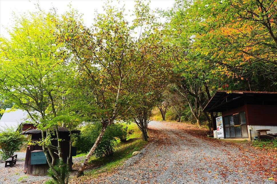 【レポート】Foresters Village Kobitto(フォレスターズビレッジ・コビット 南アルプス)キャンプ編 ① ~やはりコビットは「ナチュラルテクスチャー」の宝庫であることが変わらない_b0008655_00054876.jpg