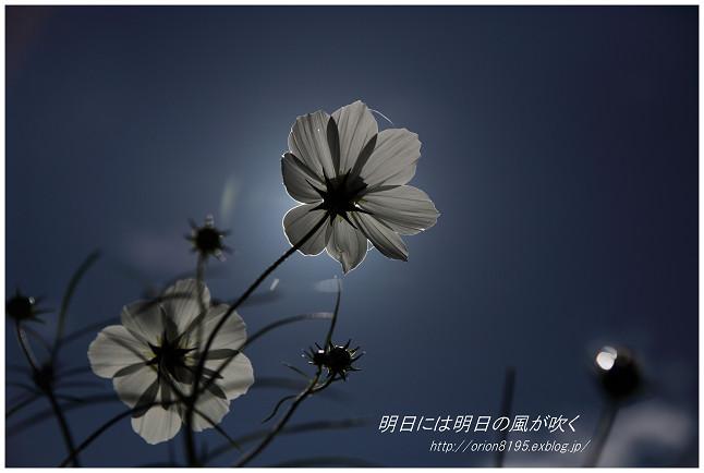 f0361079_18333273.jpg
