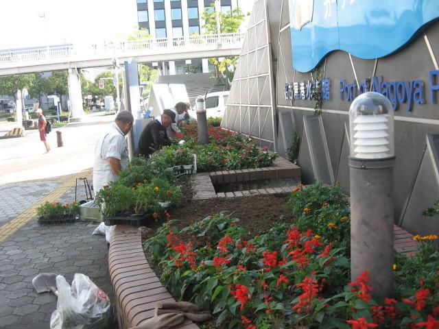 ガーデンふ頭総合案内所前花壇の植替えH28.10.19_d0338682_11571610.jpg