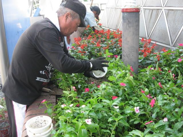 ガーデンふ頭総合案内所前花壇の植替えH28.10.19_d0338682_11575948.jpg