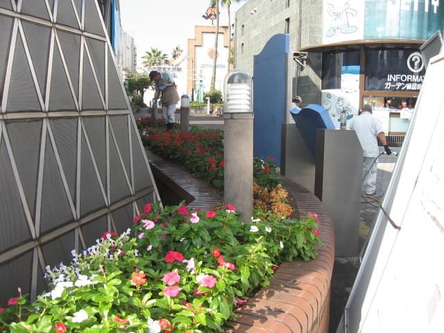 ガーデンふ頭総合案内所前花壇の植替えH28.10.19_d0338682_11583133.jpg
