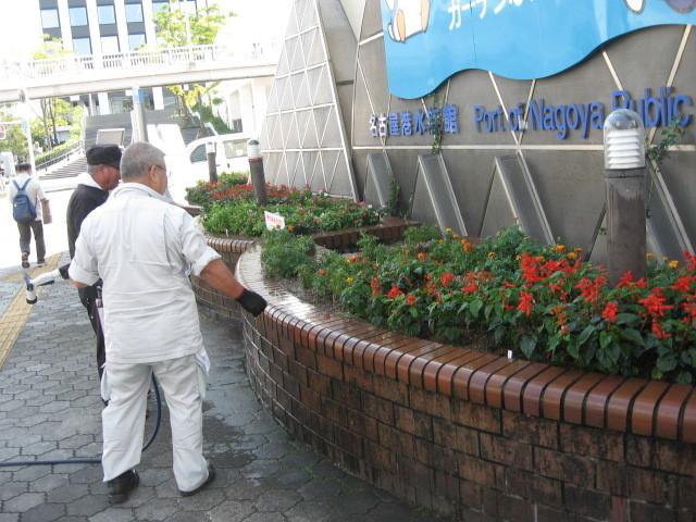 ガーデンふ頭総合案内所前花壇の植替えH28.10.19_d0338682_11592555.jpg