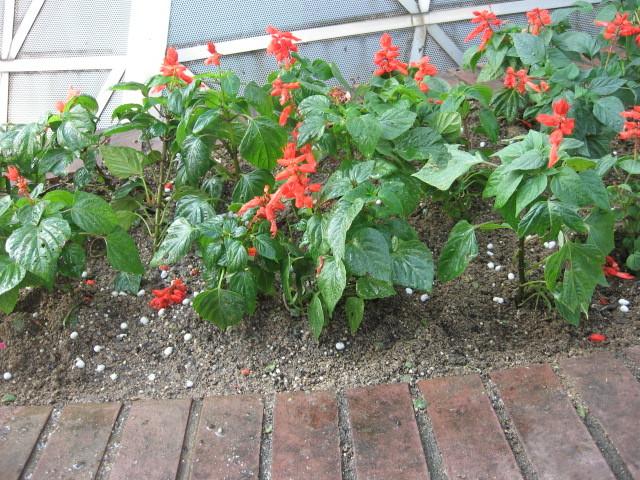 ガーデンふ頭総合案内所前花壇の植替えH28.10.19_d0338682_12505924.jpg
