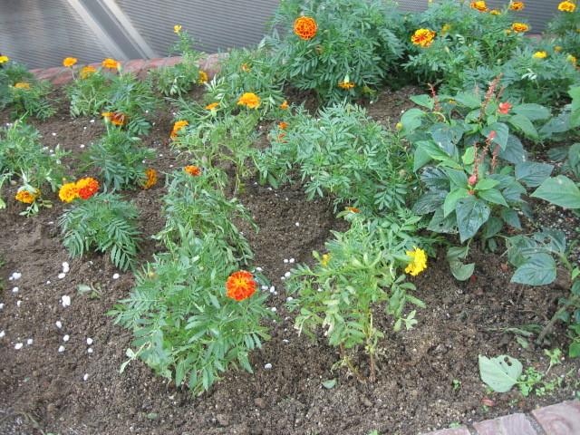 ガーデンふ頭総合案内所前花壇の植替えH28.10.19_d0338682_12520273.jpg