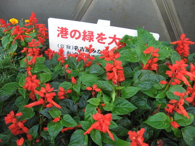 ガーデンふ頭総合案内所前花壇の植替えH28.10.19_d0338682_13004962.jpg
