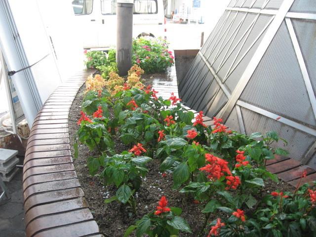 ガーデンふ頭総合案内所前花壇の植替えH28.10.19_d0338682_13010584.jpg