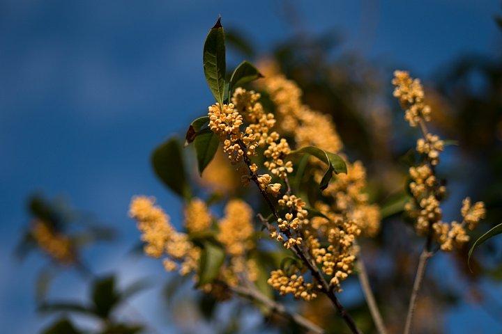 秋を告げる香り_d0353489_853107.jpg