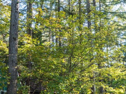 雪虫も舞う・・カンタベリーの木々の紅葉が始まりました!_f0276498_12304235.jpg