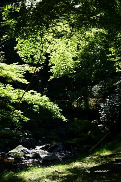 秋の1日 温泉宿へ_c0364500_22074816.jpg