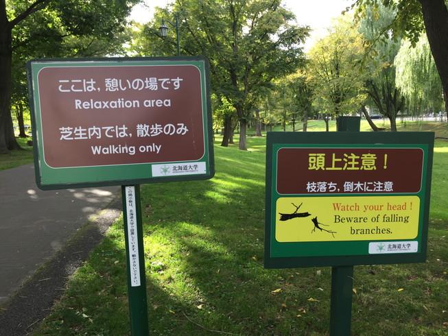 "2016年10月 『北海道大学、秋の異変』 October 2016 \""A Surprising Change in Hokkaido University\""_c0219616_12324191.jpg"