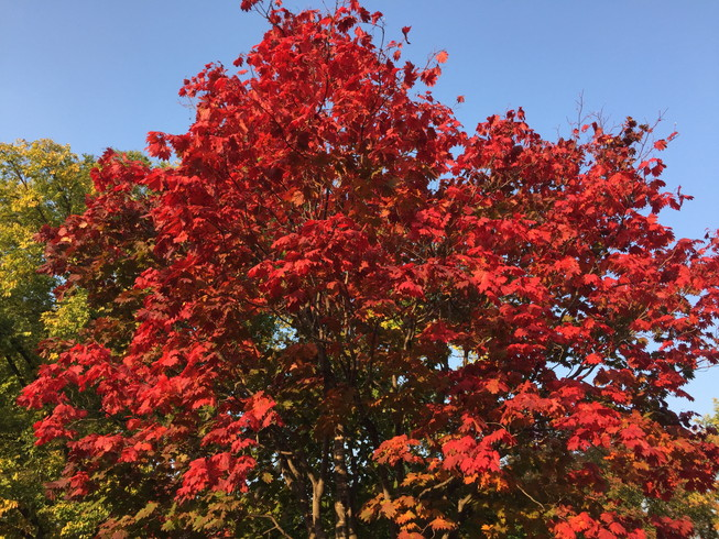"2016年10月 『北海道大学、秋の異変』 October 2016 \""A Surprising Change in Hokkaido University\""_c0219616_12374049.jpg"