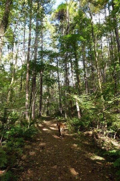 秋晴れの森の中_e0192217_16174859.jpg