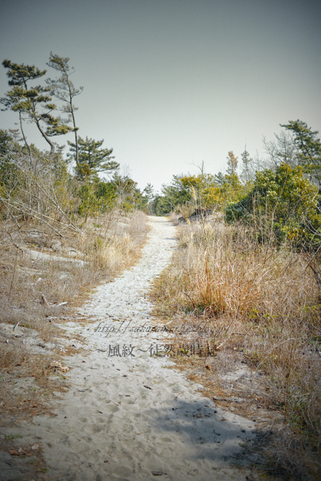 真冬の防風林散歩道_f0235723_19163279.jpg