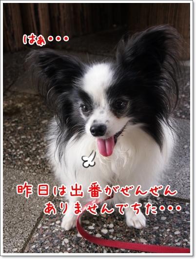d0013149_00134799.jpg
