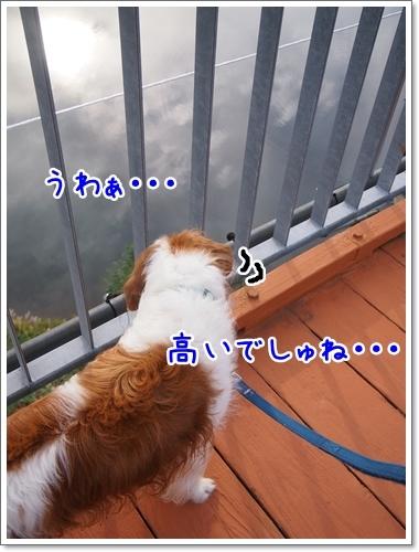 d0013149_00145152.jpg