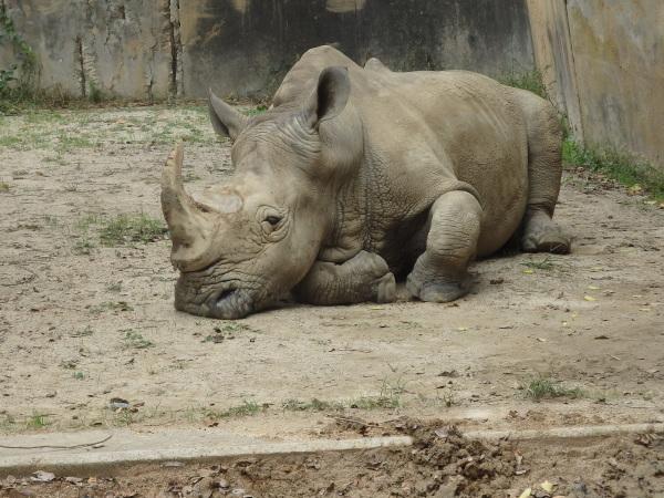 福岡市動物園に行ってきました_f0337554_15094983.jpg