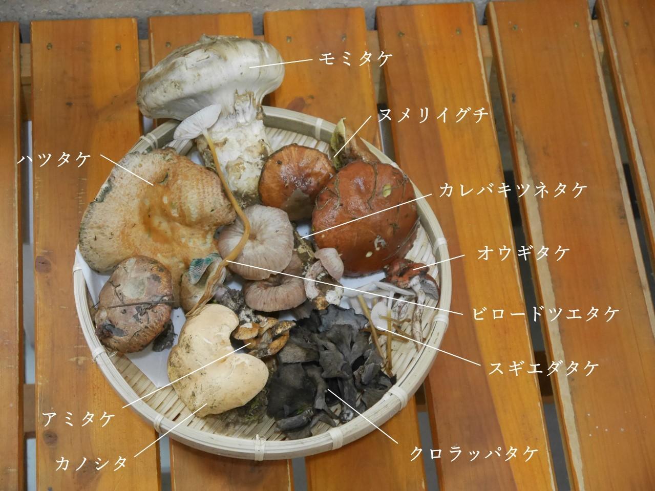 今日のお昼は野生きのこ☆_a0284279_15215261.jpg