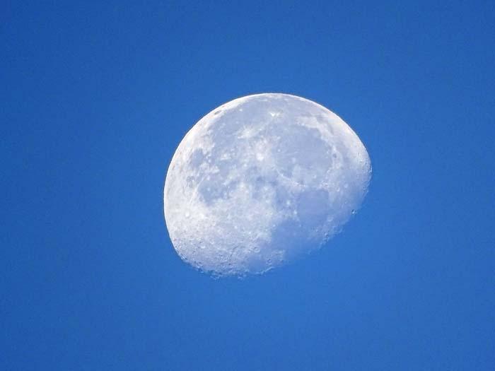モズと朝の月_e0016894_803479.jpg