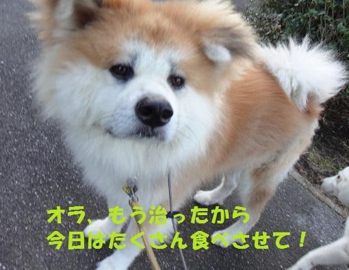 f0121712_08421710.jpg