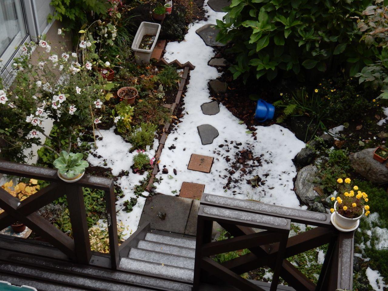 早い本格的初雪から一夜明けて_c0025115_20311236.jpg