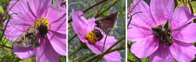 虫が少ないと思うと、虫にばかり目がいきます。_d0164519_04534278.jpg