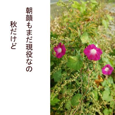 f0368538_18472710.jpg