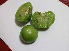 新大陸メキシコのフルーツ② 袋被りトマテスとか_c0030645_21353976.jpg