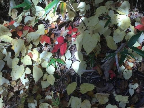 藻岩山紅葉登山_e0326953_10330610.jpg