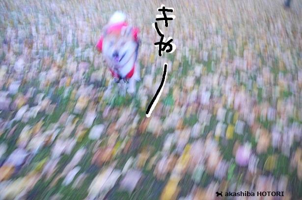 f0150377_1714721.jpg