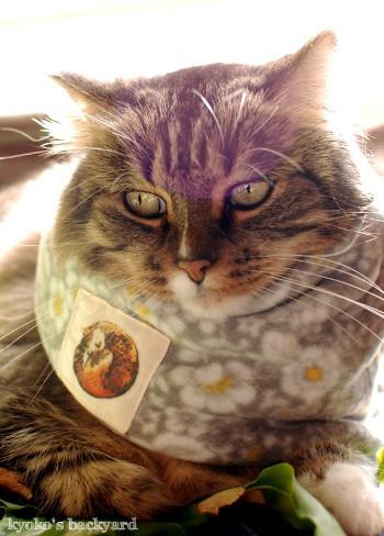 ネックウォーマー試作品と、着用例(猫&人間)_b0253205_04423935.jpg