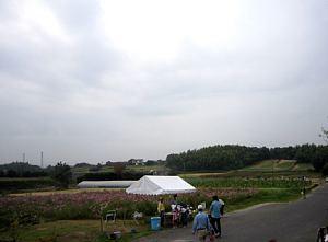 さつまいも収穫体験_d0120421_11031198.jpg