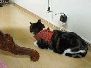 猫歩き、ガン見_f0101128_911784.jpg
