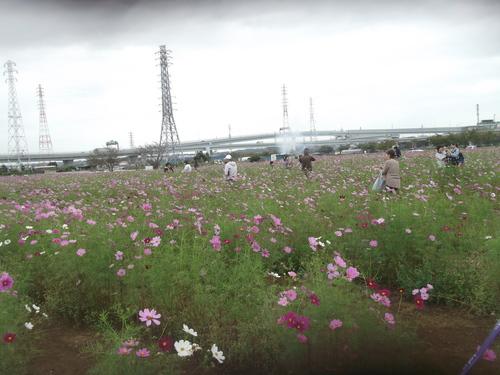 夢の日本シリーズ開幕_b0137932_1455236.jpg