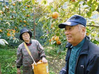 太秋柿 秋の果実の王様『太秋柿』が最旬を迎え大好評販売中!柿は体内のアルコール分解にも良いんです!_a0254656_1650481.jpg