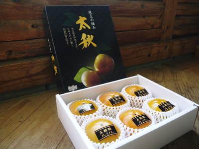 太秋柿 秋の果実の王様『太秋柿』が最旬を迎え大好評販売中!柿は体内のアルコール分解にも良いんです!_a0254656_1655451.jpg