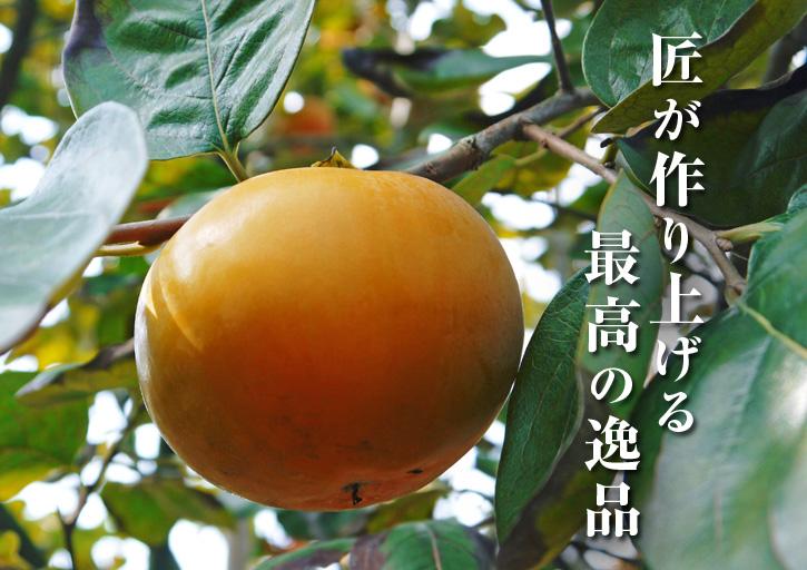 太秋柿 秋の果実の王様『太秋柿』が最旬を迎え大好評販売中!柿は体内のアルコール分解にも良いんです!_a0254656_1844851.jpg