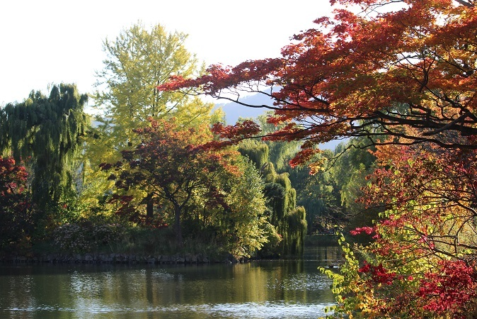 「秋の中島公園」 オーソドックスに行ってきました。_f0362073_05374613.jpg
