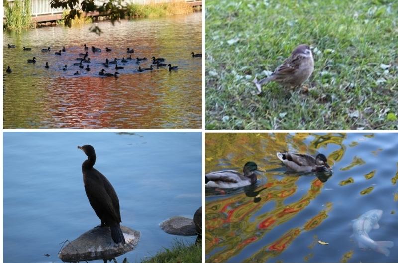 「秋の中島公園」 オーソドックスに行ってきました。_f0362073_05452490.jpg