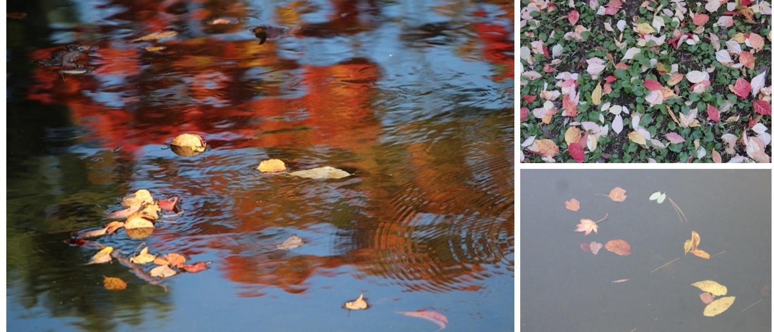 「秋の中島公園」 オーソドックスに行ってきました。_f0362073_05473499.jpg