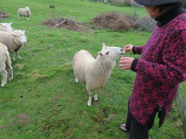 走る羊達、10月2日の様子_e0133780_09290903.jpg