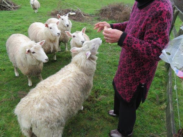 走る羊達、10月2日の様子_e0133780_09291996.jpg